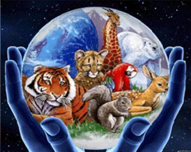 День защиты животных картинки для детей